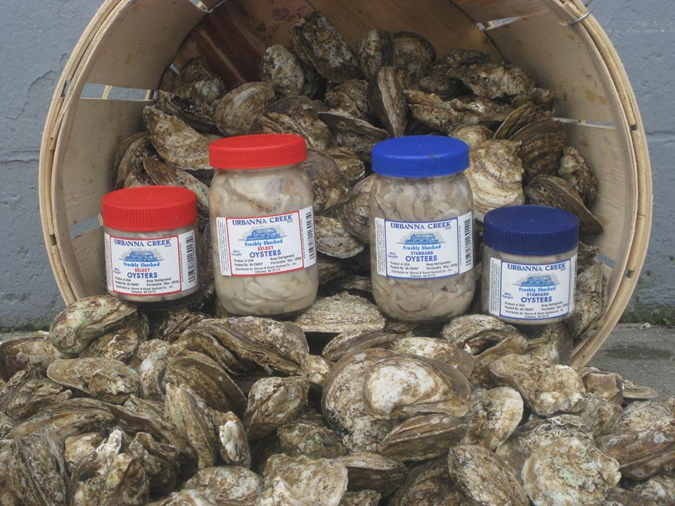 Fresh oysters in jars and shells